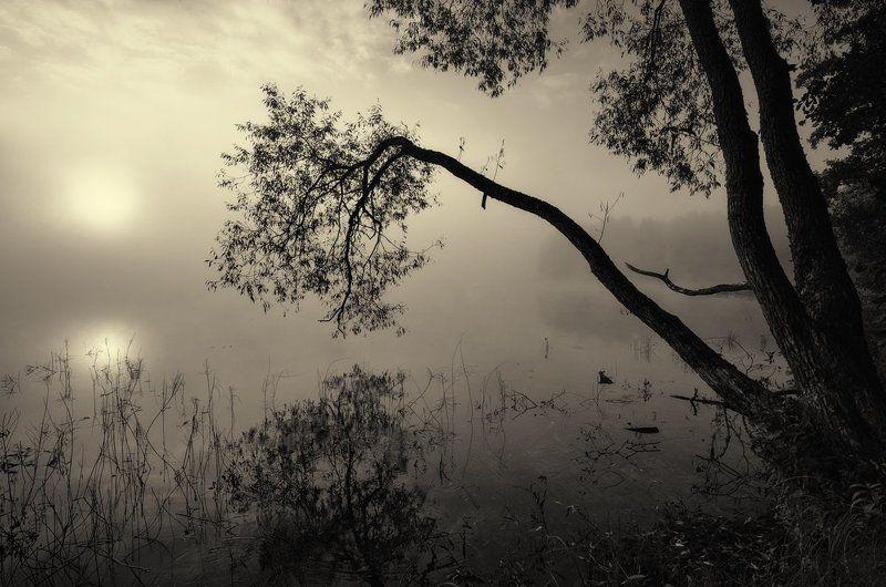 Склоняясь пред туманной тишиной...photo preview