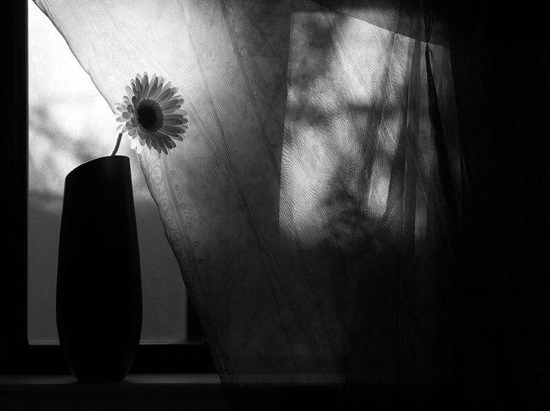 свет, тени, натюрморт Философия света и тени в натюрмортахphoto preview