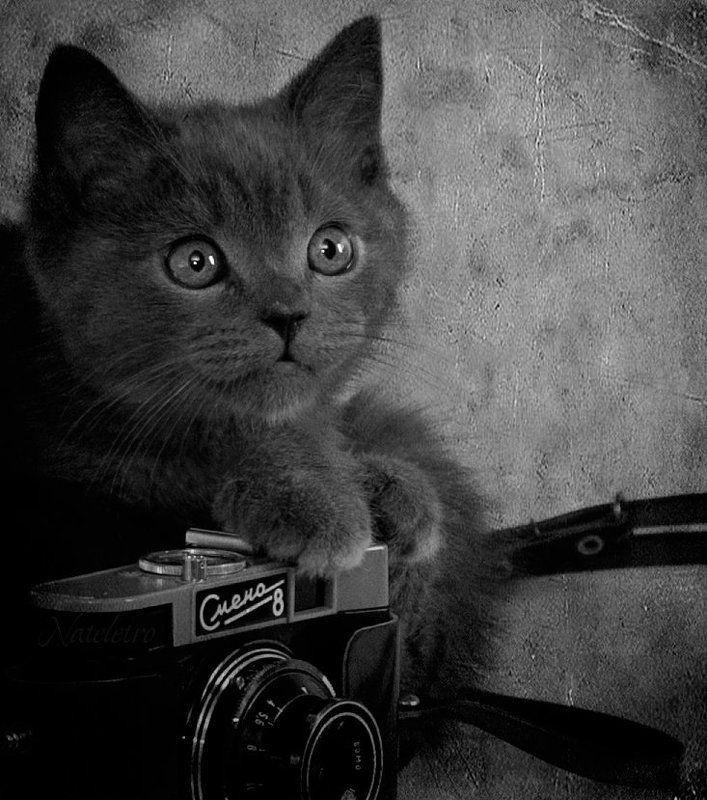 Ко Дню фотографа :)photo preview
