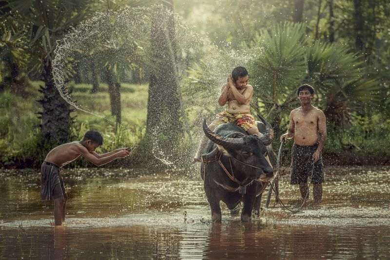 vietnam, sapa, outdoor, lerning, thailand, meadow, park, agriculture, mammal, green, boy, grass, people, smiling, asia, family, childhood, indochina, hair, kid, rice, background, child, farmer, little, trail, leisure, buffalo, white, spring, expression, h Happy boy riding water buffalo.photo preview