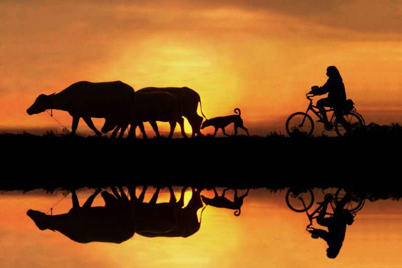 Cycling,BicycleS,cenics,Sunset,Lake,Reflection,People,Two ,People,Nature,Silhouette,Thailand,Atmospheric ,MoodBeauty ,In NatureCloud - SkyColor ,Image,Horizontal,On The Move,Outdoors,Photography,Sky,Sunlight,Togetherness,Transportatio Back homephoto preview