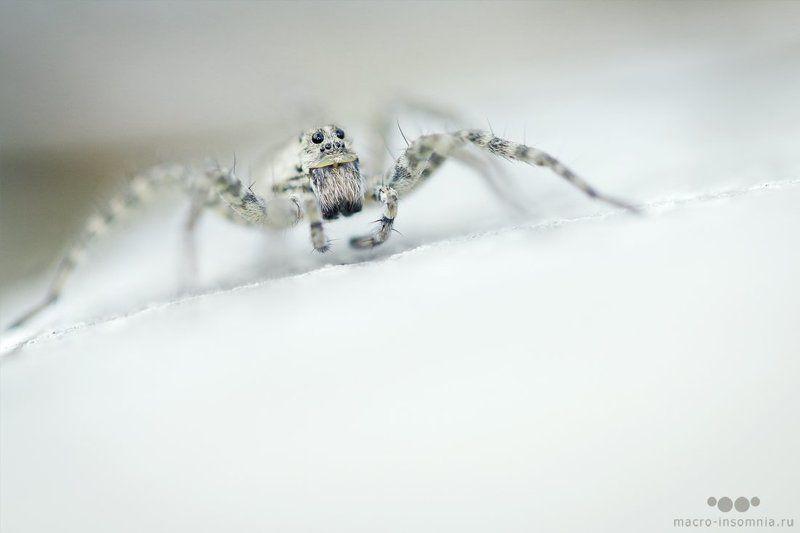 белый, вечер, макро, насекомые, паук Безмолвиеphoto preview