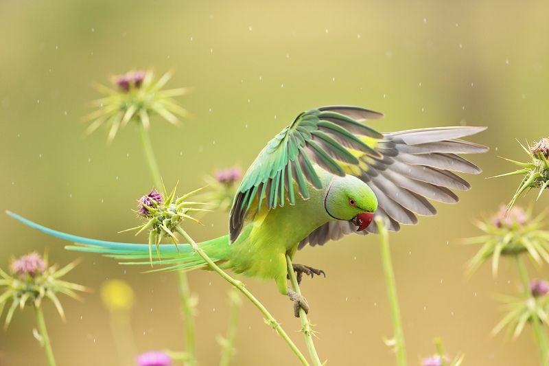 Попугай и дождьphoto preview