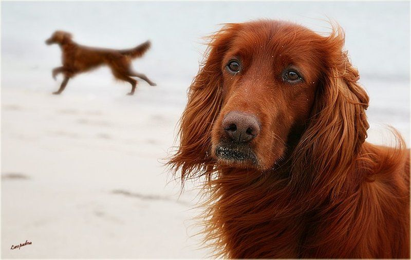 северный ледовитый океан, баренцево море, малая немецкая бухта, холод ,пес , тоска Собачья тоска...photo preview