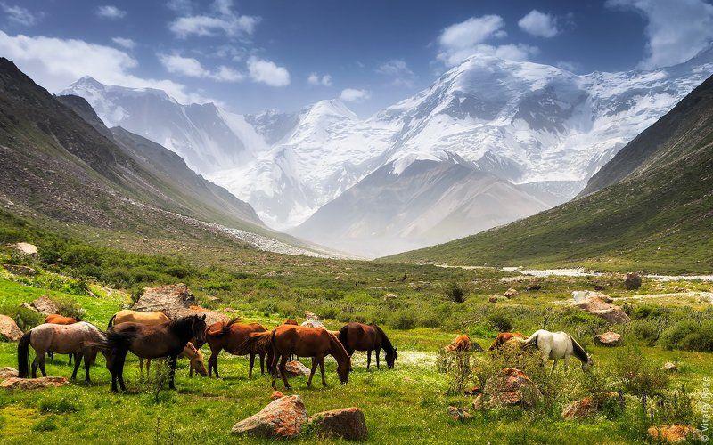 казахстан, горы Высотаphoto preview