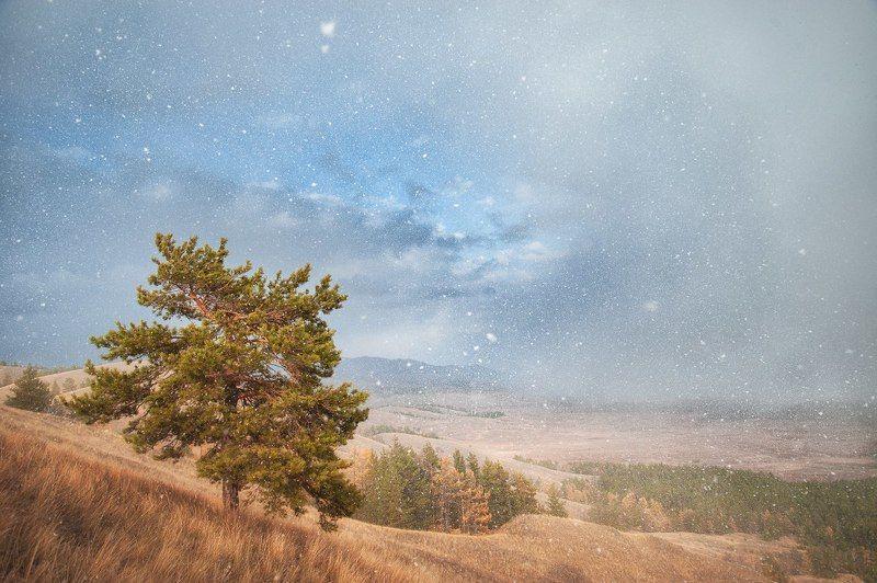 Горы, Осень, Снег, Сосна, Холмы, Южный урал Бонсайphoto preview