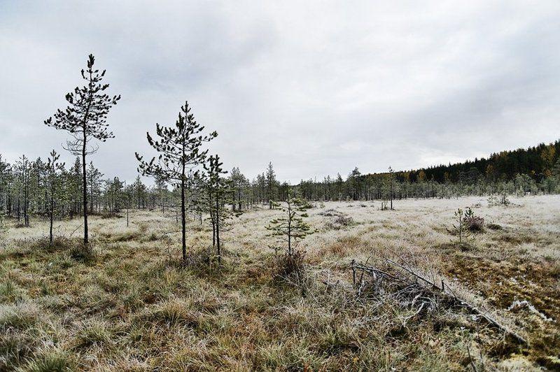 осень,иней,природа,болото,облака, Дыхание зимыphoto preview