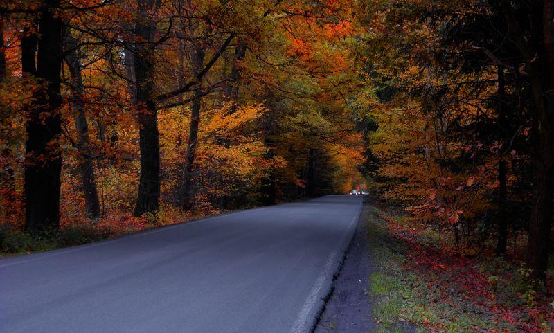 Дорога через буковый лесphoto preview