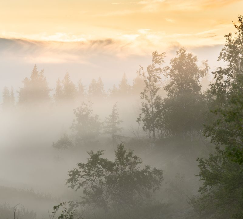 Рассвет, Туман, Утро, Ямал Летний рассветphoto preview