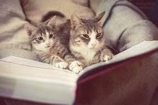 Маман читает ребенку книгу