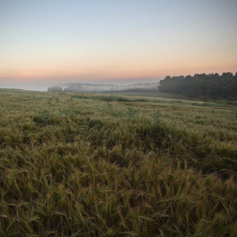 подмосковье, поле, рассвет, туман Утренний туманphoto preview