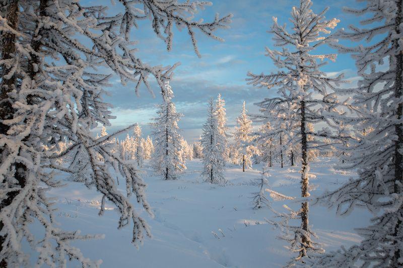 Закат, Зима, Ноябрь, Снег, Тундра, Уренгой Ноябрьский закатphoto preview