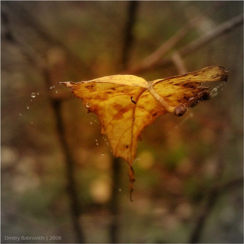 осень, лист осенняяphoto preview