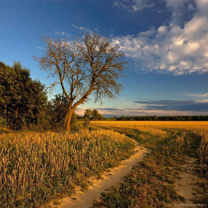 поле,пейзаж,вечер,лето,дерево На краю поляphoto preview