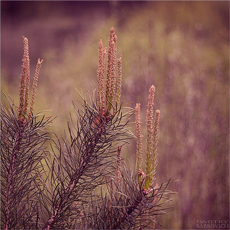 природа, ель ni04emphoto preview
