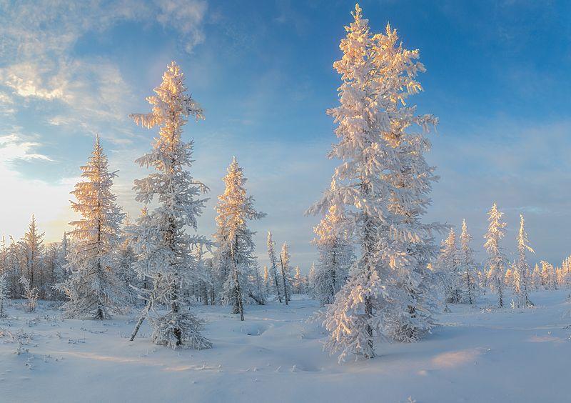 Закат, Зима, Ноябрь, Осень, Снег, Уренгой, Янао Закатphoto preview