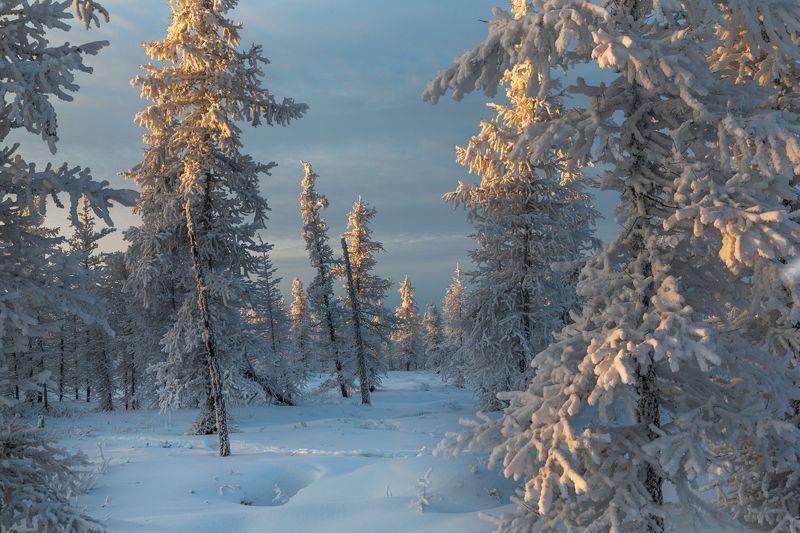 Закат, Зима, Ноябрь, Снег, Тундра, Янао Один ноябрьский закат!photo preview