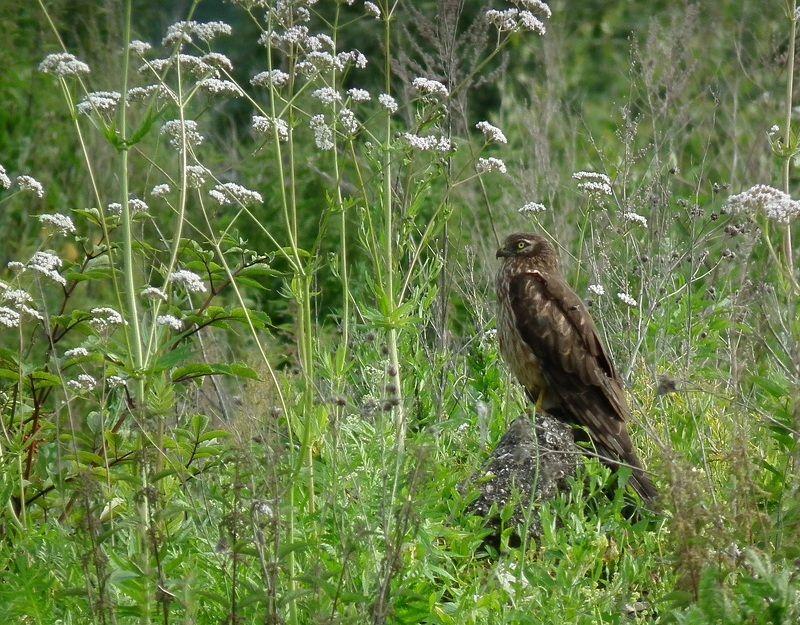 птица лето луг Спрятался в цветахphoto preview