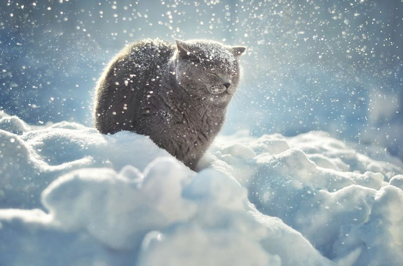 Let it snow!photo preview