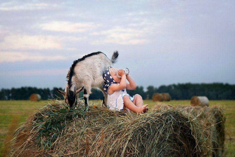 О пользе козьего молокаphoto preview