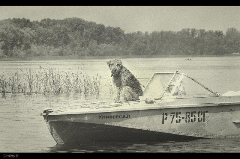 собака, катер, лето. волга универсалphoto preview