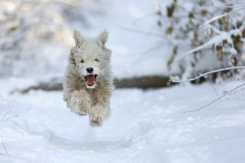 #dog, #nature, #snow, #winter, #зима, #снег, #собака, #эмоции Левитацияphoto preview