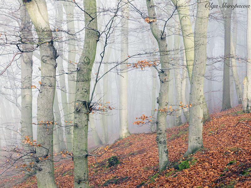 Карловарский лес фото превью