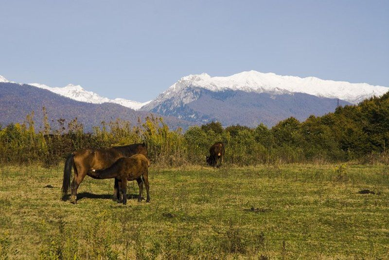 абхазия, страна души Осенний пейзаж.photo preview