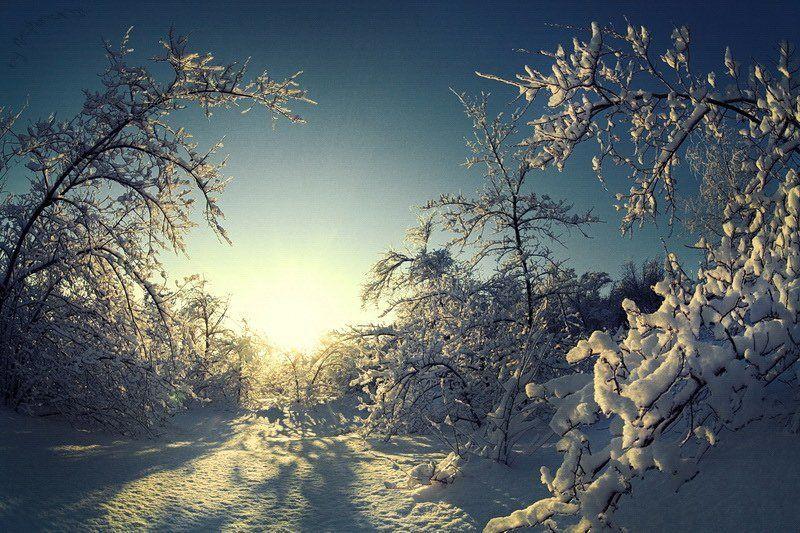 снег, лёд, зима, деревья, мороз Сон деревьев под снегом.photo preview