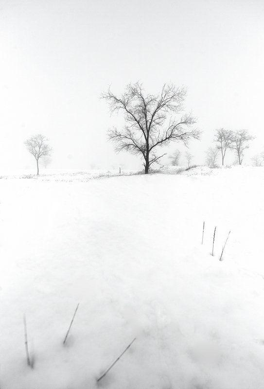 зима, деревья, туман Попробуй прикоснись.photo preview