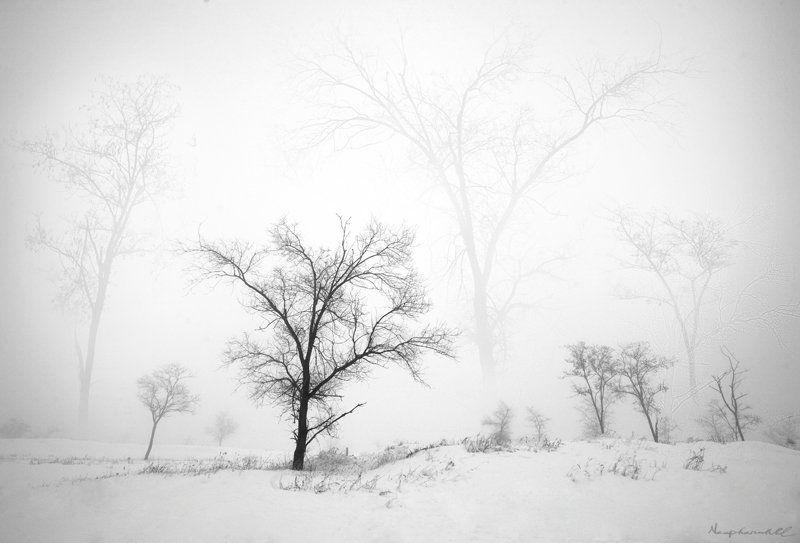 зима, сон, деревья, туман, снег Сны деревьев.photo preview