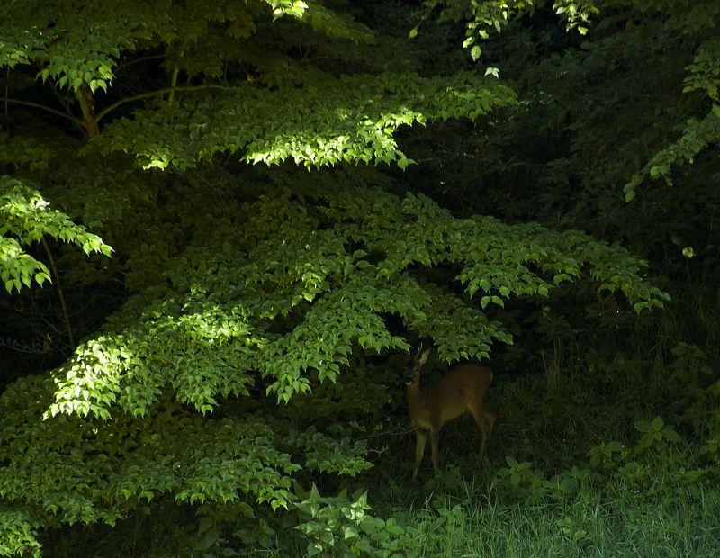 Под пологом лесаphoto preview