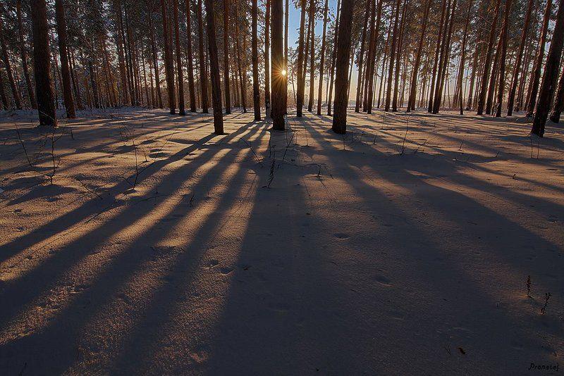 Снежно-полосатый.photo preview