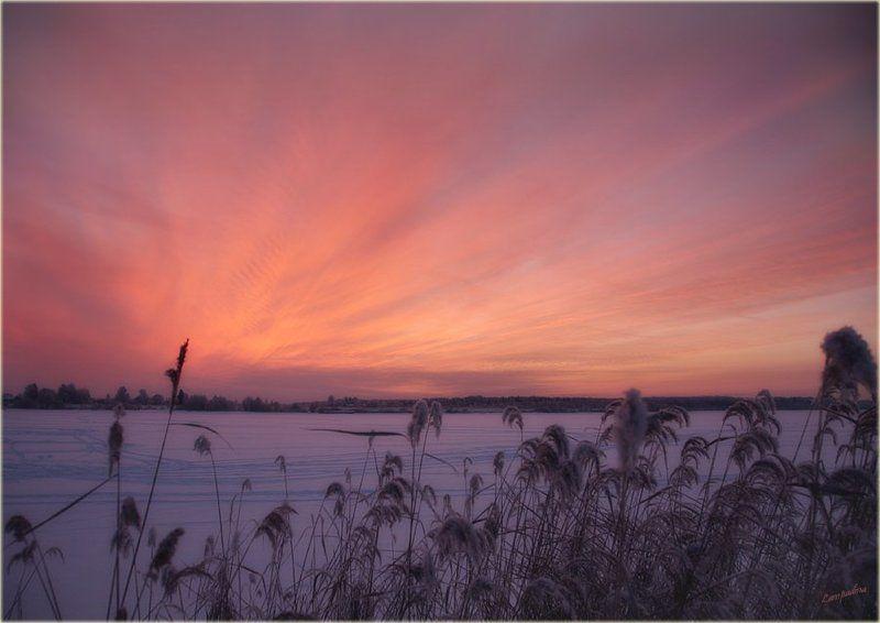 тверская область, волга,  конаково, закат, травинки, мороз Гимн уходящему солнцуphoto preview
