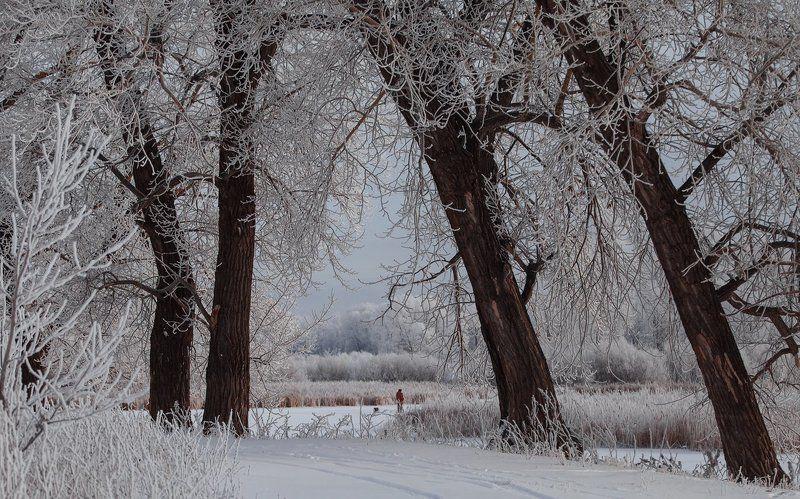 Зимним утромphoto preview