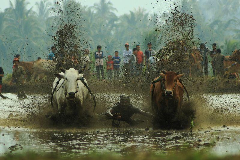 Hario Suhendra, Indonesia
