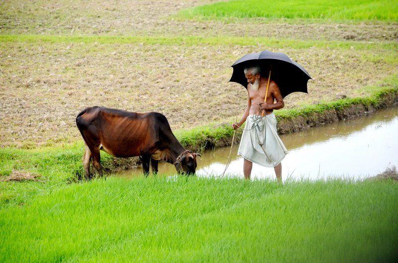 Masud Parvez, Bangladesh