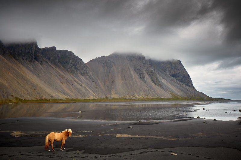 stokksness, iceland, horse, vestrahorn, Hesturphoto preview