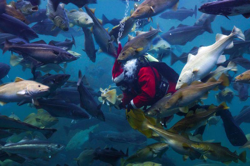 Sea Christmasphoto preview