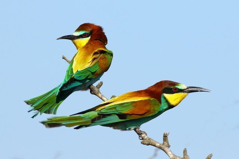 Bee-eater Talesphoto preview