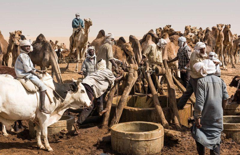 Кочевники, Сахара, Чад У Колодцаphoto preview