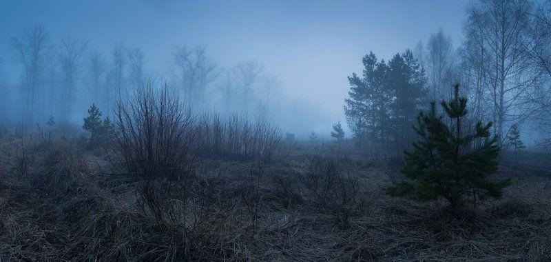 Апрельский туман в Котовском лесуphoto preview