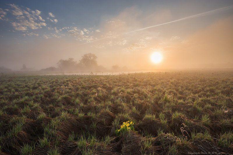 2016, Весна, Деревья, Небо, Облака, Россия, Солнце, Трава, Туман, Утро, Цветы ***photo preview