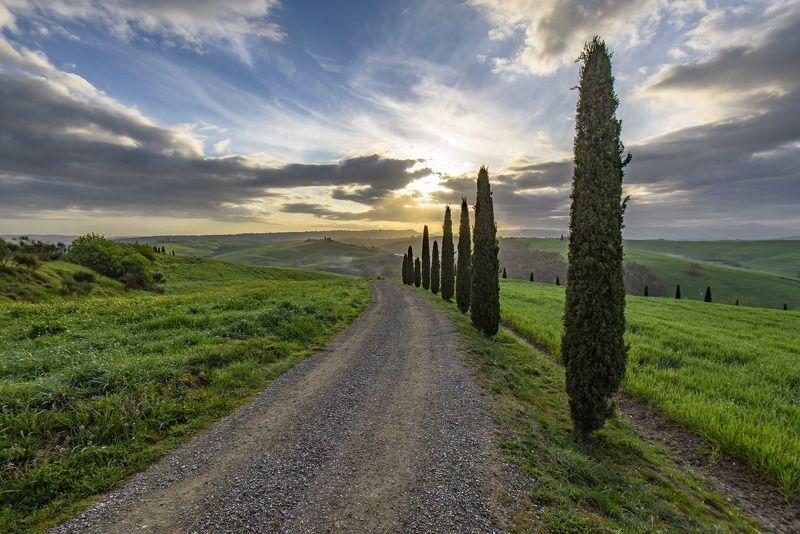пейзаж, утро, туман, деревья, холмы, восход, италия, тоскана Дорога к солнцуphoto preview