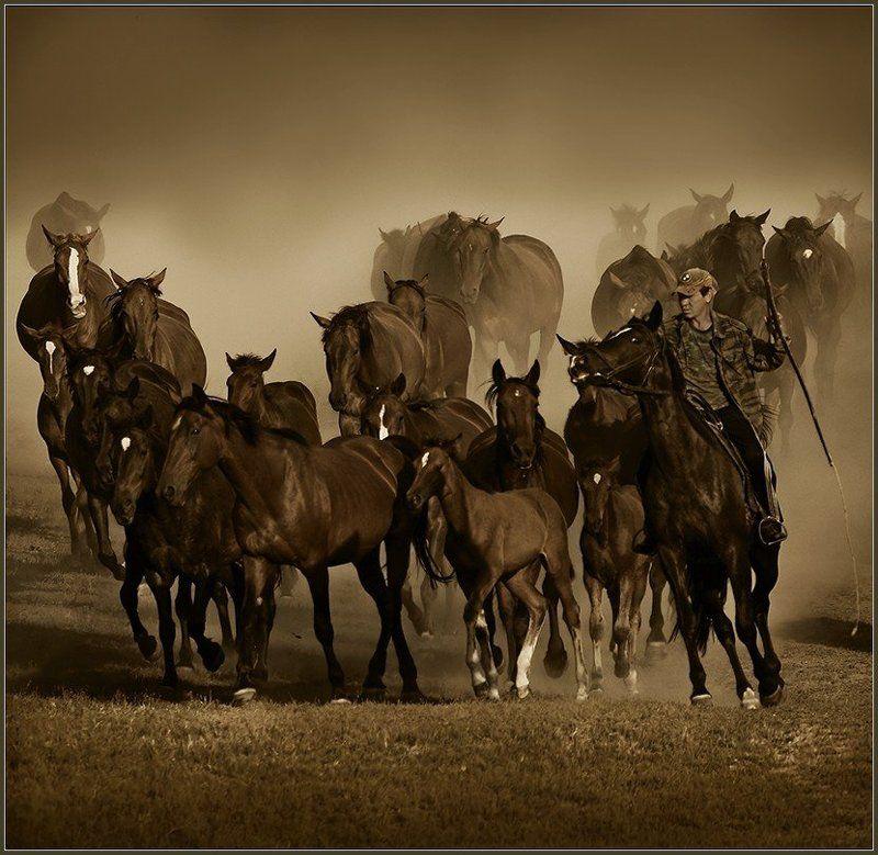 кони,лошади,табун,пыль \