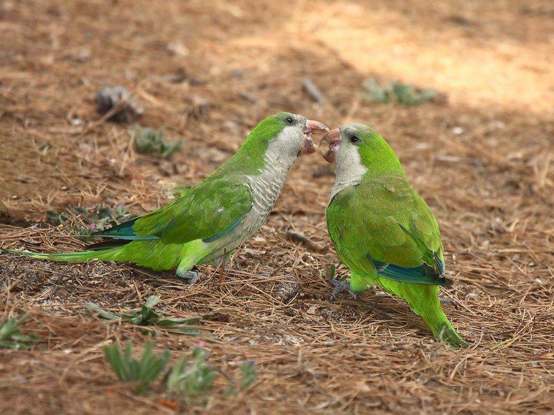 Из жизни попугаевphoto preview