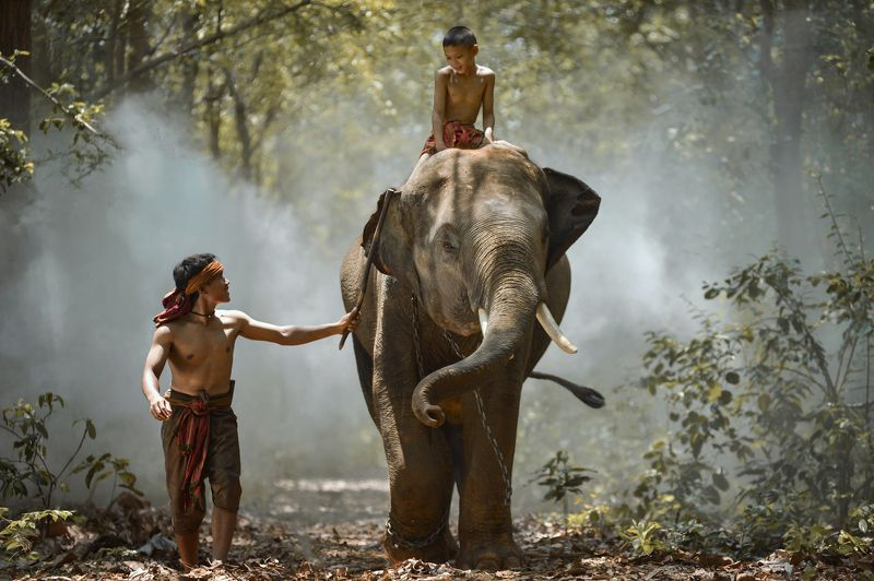 Action, Aec, Africa, Asia, Asian, Bearfoot, Beautiful, Boy, Child, Elephant, Homestay, Man My brother and elephantphoto preview
