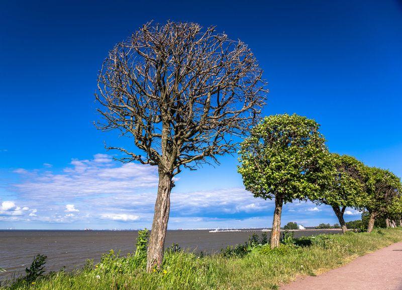 деревья Дереваphoto preview