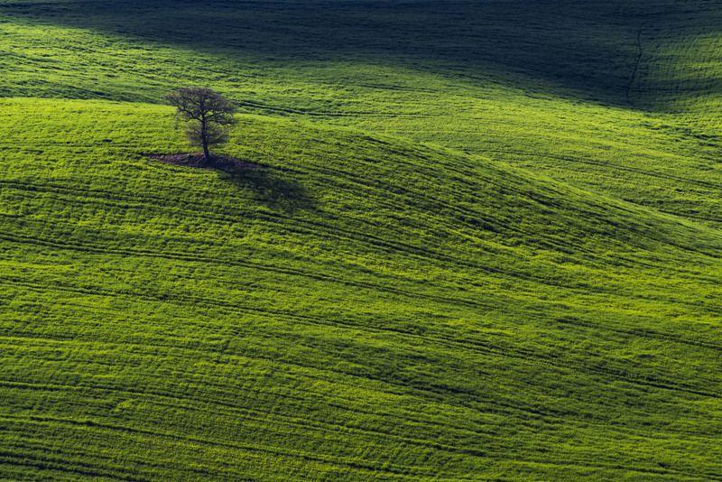 поля, холмы, пейзаж, италия, пейзаж, природа, дерево, тоскана, долина Зеленые волныphoto preview