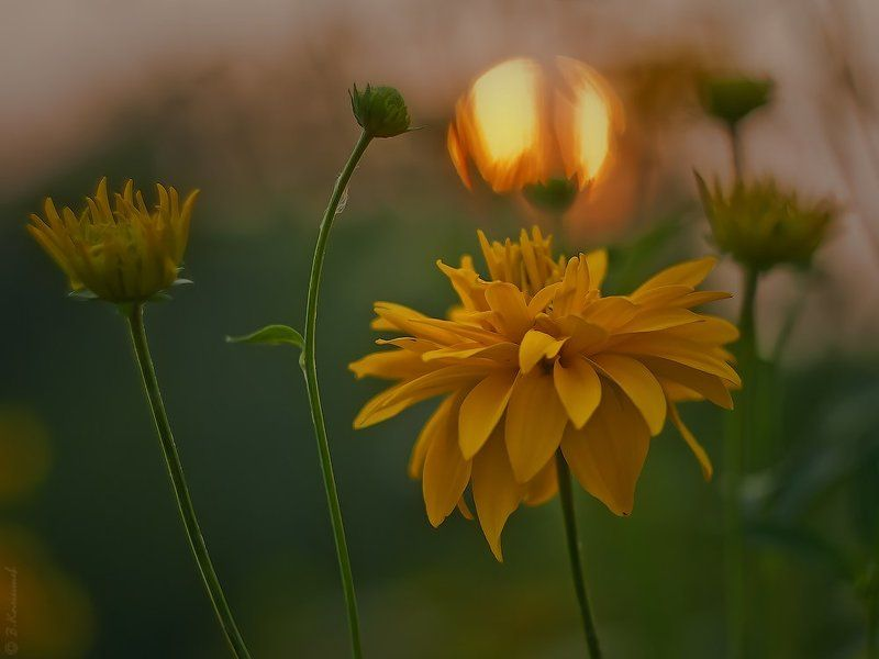 Вечер, Закат, Лето, Природа, Цветы Вечерняя беседа...photo preview